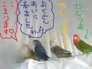 2011_0201_162612ts3m1638